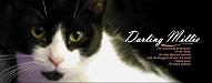 darlingmillie
